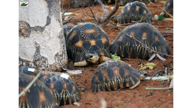 El Paso Zoo to help rescue nearly 10,000 'critically endangered' tortoises in Madagascar