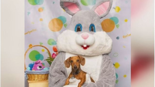 PetSmart offering free pictures of your pet with Easter Bunny this weekend