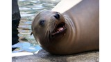 Sunny, the beloved El Paso Sea Lion, to be inducted to Animal Hall of Fame